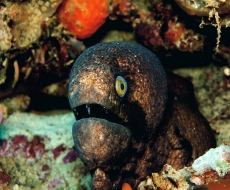 Eel peers out at snorkelers