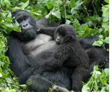 Mother and Baby in Rwanda
