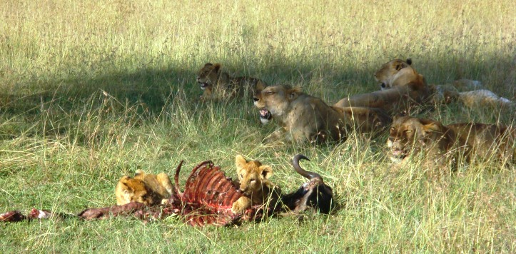 Cubs take thair share of the kill