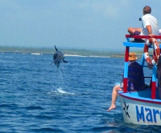 Bottlenose dolphin in Watamu