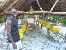 Community bee-keeping on Kirepwe Island