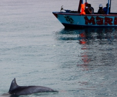 Marine Tours and dolphins